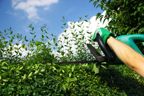 La maison des services entretien espaces verts chimay for Ouvrier entretien espaces verts